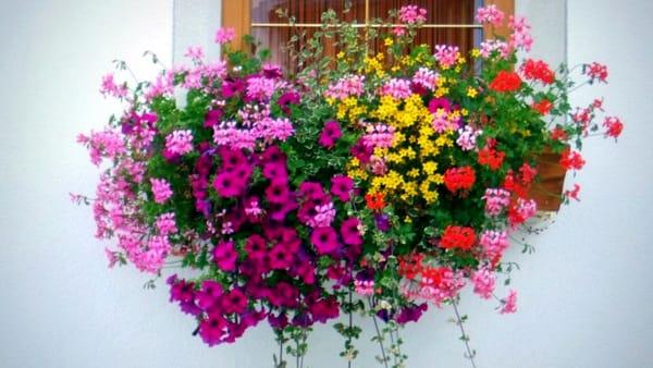 L insolito giardino piante e fiori rari e speciali